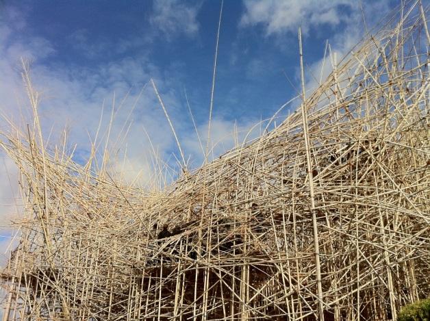 big_bambu